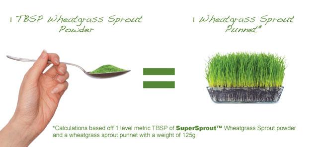 conversion-wheatgrass