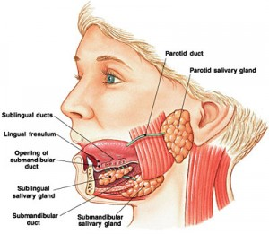 Salivary Gland Cancer